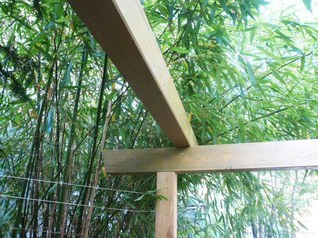 bambus_tor